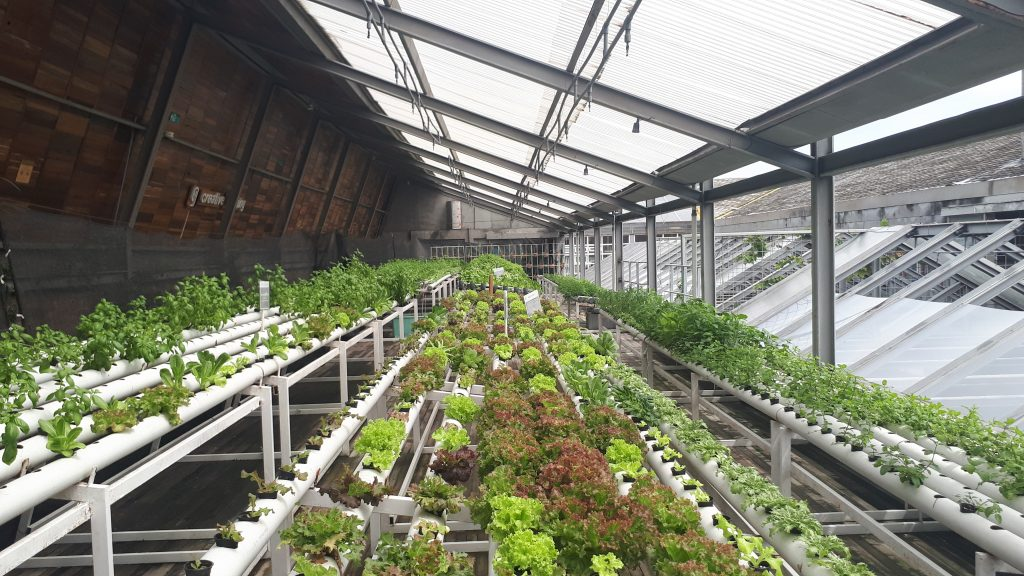 rows of plants in a greenhouse