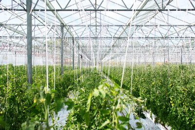 agricultural greenhouse