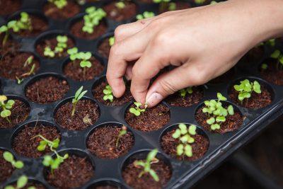 agriculture soil moisture