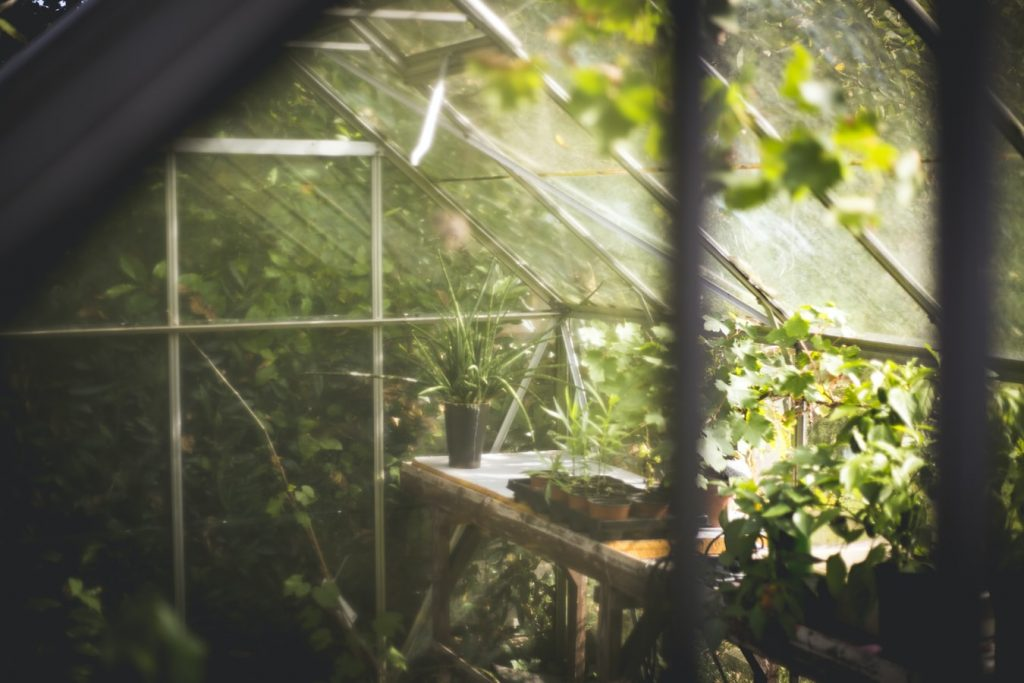 The inside of a greenhouse